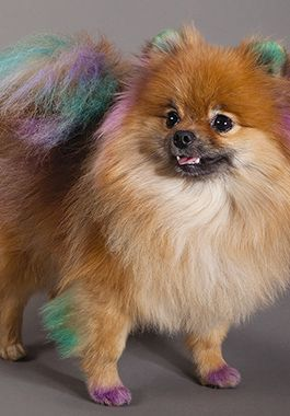 Dog Groomers Baths Brushing For Puppies Adults Petsmart Dog Groomers
