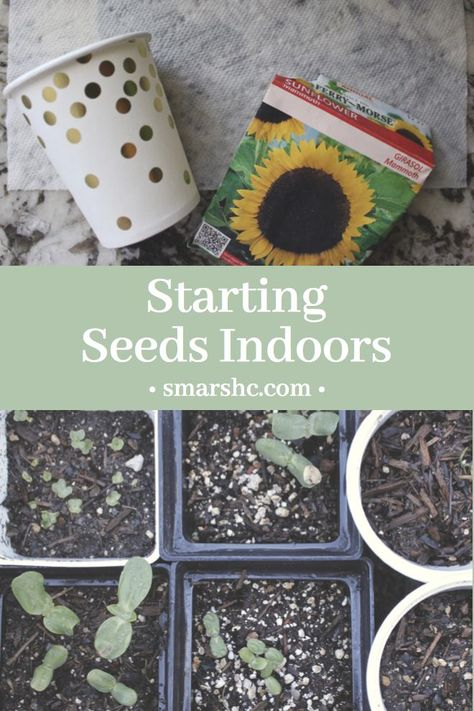 Go to the following link to learn how I start my seeds indoors before transitioning them to the garden. All you need is a cup and paper towel!