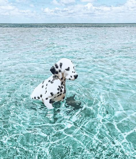 Baby Animals Super Cute, Cute Little Animals, Cute Funny Animals, Funny Dogs, Baby Animals Pictures, Cute Animal Pictures, Animals And Pets, Wild Animals, Cute Dogs And Puppies