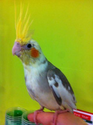 The Best Pet Birds For Kids 23 The Best Pet Birds For Kids 23