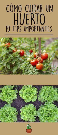 260 Ideas De Plantas Cultivo De Plantas Jardineria Y Plantas Plantas