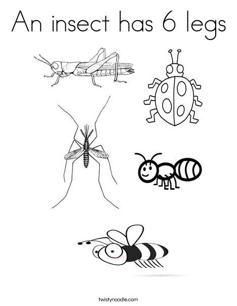 An Insect Has 6 Legs Coloring Page Tracing Twisty Noodle