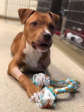 Pin On Nyc Dogs That Made It Out Of The Shelter Now Need Fosters