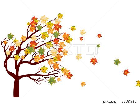 Found On Bing From Pixta Jp Fall Leaves Drawing Tree Drawing Maple Tree Tattoos