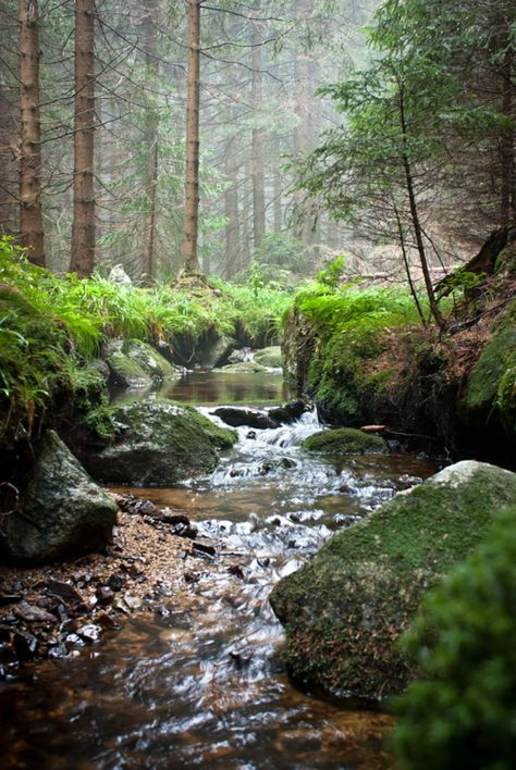 the peace and serenity of a trickling little stream......