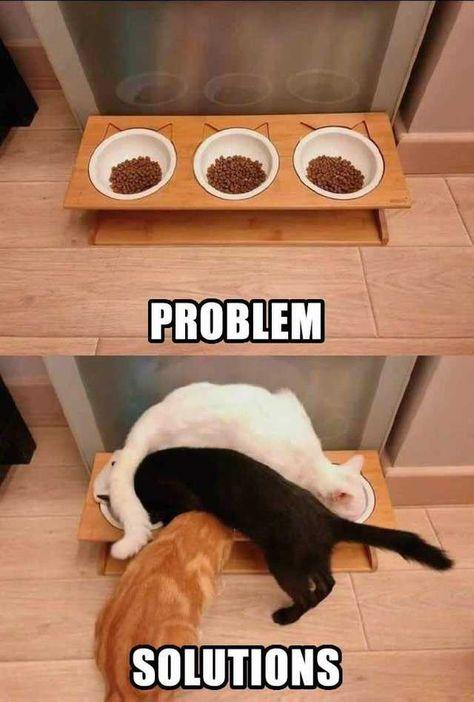 Imgur Post - Imgur   Funny Animal Memes   #funny