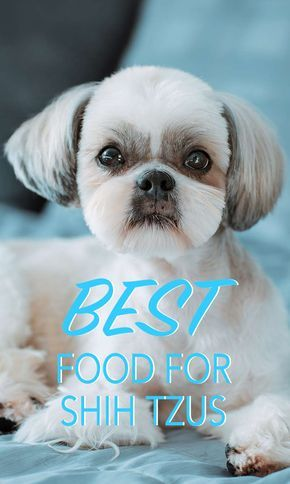 Best Dog Food For Shih Tzu Puppies Adults And Senior Dogs Bow