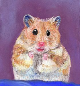 Art Prints From Pastel Painting Hamster Dance By Jackie Stone