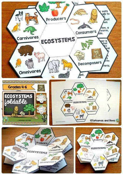 Ecosystems Interactive Science Notebook Foldables Interactive Science Notebook Interactive Science Science And Nature