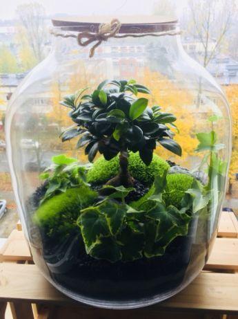 Las W Sloiku Lisc W Szkle Warszawa Image 2 Plant Decor Terrarium Plants