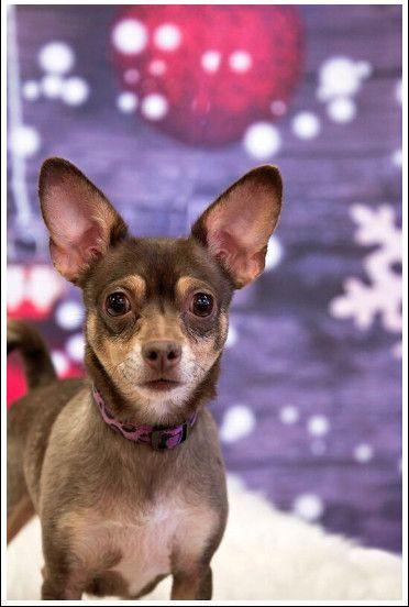 Dogs For Adoption Near Chestermere Ab Petfinder Dog Adoption