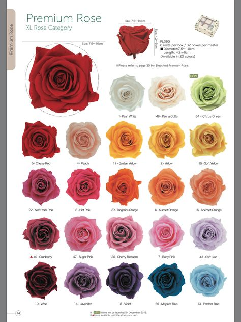 Pin By Green Tech Flowers On Preserved Fresh Roses Rose Varieties Rose Color Meanings Flower Background Iphone