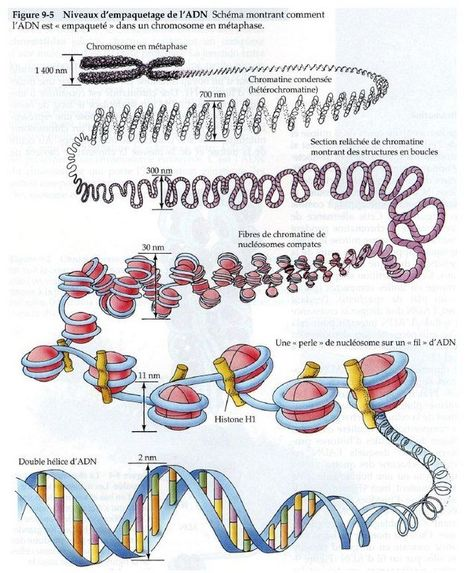 Dossier Exclusif : ADN humain et extraterrestres