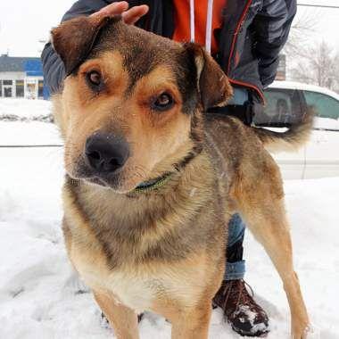 Adoptable Rescue Dog Calgary Alberta Canada Dogs Dog Adoption