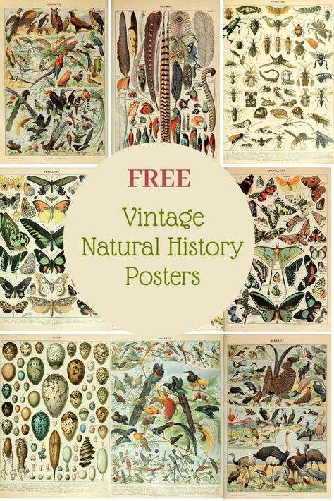 Free Vintage Natural History Posters of Adolphe Millot. History Posters, Nature Posters, History Quotes, History Facts, Art History, British History, Vintage Prints, Vintage Posters, Vintage Botanical Prints
