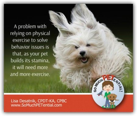 Is A Tired Dog Always The Best Solution Dogs Best Dog Training