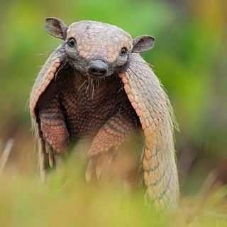 This Little Aramadillo Is Just So Happy About Cards Photos By U Canameow U Suzilla10 U Honeybee Artistry U Additional Wind Animals Beautiful