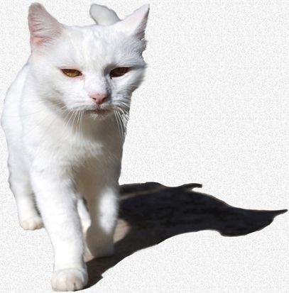 Inflammatory Bowel Disease In Your Cat Feline Chronic Diarrhea And Vomiting Inflammatory Bowel Disease Cats Creatures