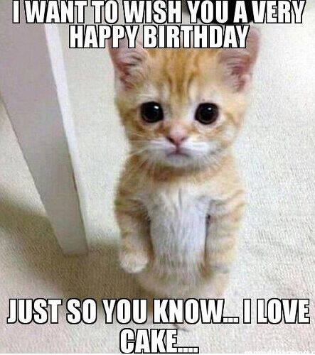 Top 100 Funniest Happy Birthday Memes Most Popular Happy Birthday Cat Grumpy Cat Birthday Grumpy Cat Humor