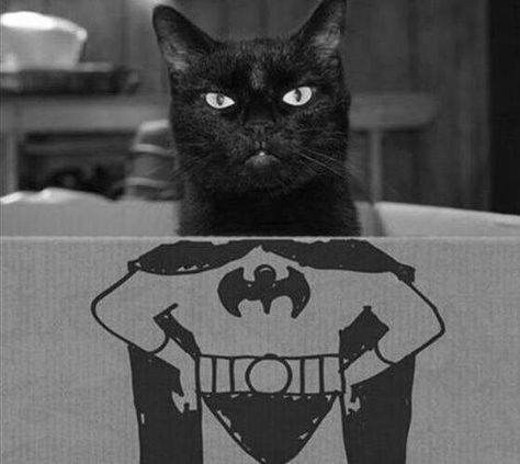 PetsLady's Pick: Funny Bat Cat Of The Day ... see more at PetsLady.com ... The FUN site for Animal Lovers