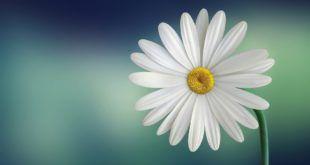 اجمل خلفيات لابتوب Hp Hd Laptop Wallpapers 1080p Tecnologis Flower Images Inspirational Quotes With Images Short Inspirational Quotes