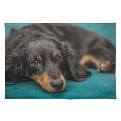 Cute Dachshund Laying Down Placemat Zazzle Com Dachshund Breed