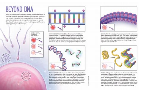 New technology to control user-defined endogenous genes with light - new blueprint gene expression