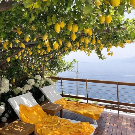 Dreaming under the lemon tree 🍋 @theworldfromawindow