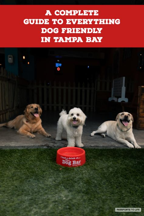 5 Best Dog Friendly Activities In Tampa Bay Dog Friends Dogs