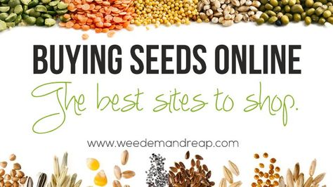Buying Seeds Online: The Best Sites to shop! from weedemandreap.com  She favors non-GMO,non hybrid,heirloom and/or organic seeds. short, but good list.