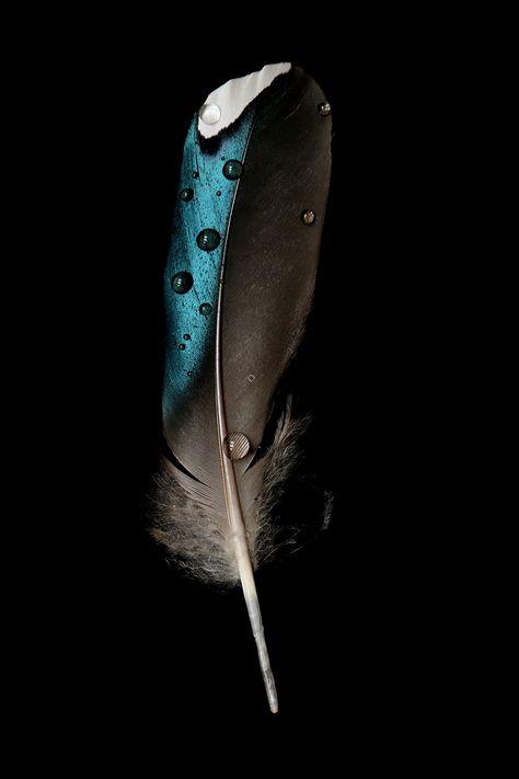 duck feather | STILL (mary jo hoffman)