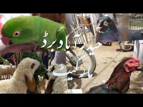 Sunday Birds Market Hyderabad on 21.03.202 near Pakka Qila Hyderabad Sindh.