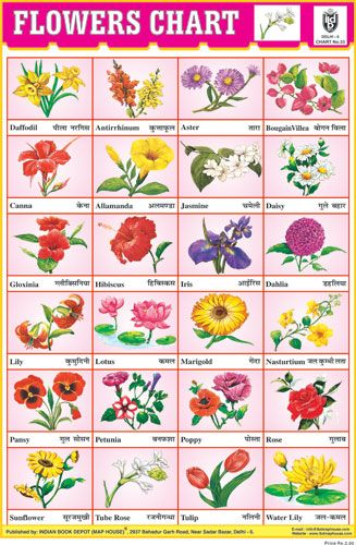Flowers Chart 24 Photo Red Preschool Charts Flower Chart Nursery School Activities