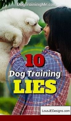 How To Train A Service Dog At Home And Pics Of German Shepherd Dog
