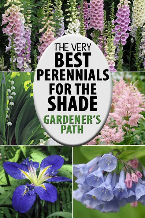 - Garden - The Best Flowering Perennials for the Shade Do you have a shady area that you'd like to brighten up, with a minimum of annual maintenance? Try layering some perennials into the area. Learn about our favorite suggestions now on Gardener's Path. Shade Garden Plants, Garden Shrubs, Perenial Garden, Full Shade Plants, Flowering Plants For Shade, Plants For Under Trees, Perennial Flowers For Shade, Climbing Shade Plants, Ground Cover Plants Shade