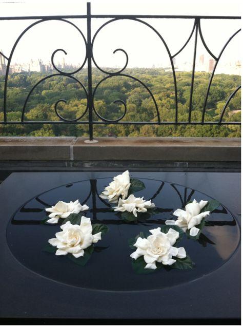 Beautiful Gardenias Gardenias Jazmin