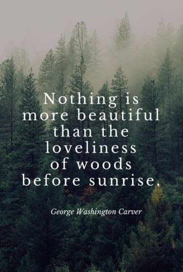203 EXCLUSIVE Nature Quotes That Will Remind You Beauty