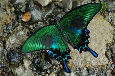 From Caterpillar to Butterfly 19 incredible transformations