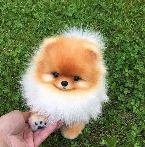 Lucky pawwww - Animals