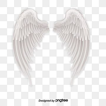 White Angel Wings And Feathers Angel Angel Wings White Png Transparent Clipart Image And Psd File For Free Download Angel Wings Png White Angel Wings Wings Png