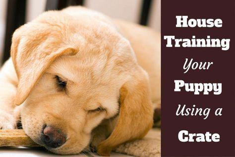 Help Training My Dog Dogtrainingmyluv 2227432966