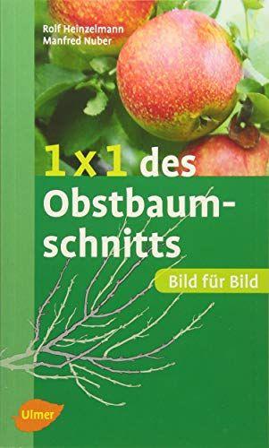 1 X 1 Des Obstbaumschnitts Bild Fur Bild Obstbaum Nicht Schneiden Verlag Eugen Ulmer Obstbaumschnitt Obst Schnittchen