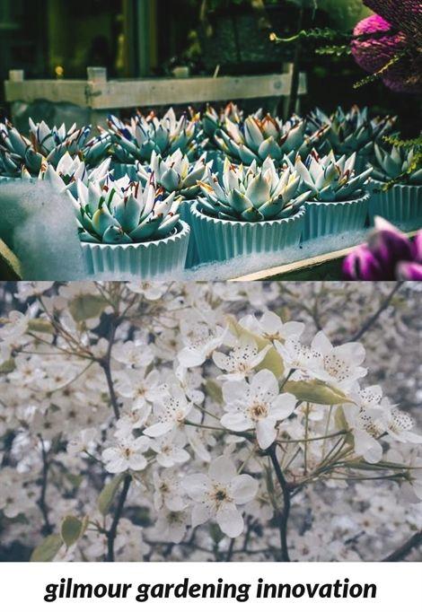 gilmour #gardening innovation_360_20180915173747_53 garden