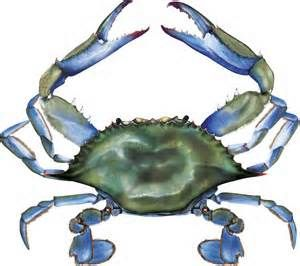 Crab Clip Art Bing Images Maryland Blue Crab Mandala Coloring
