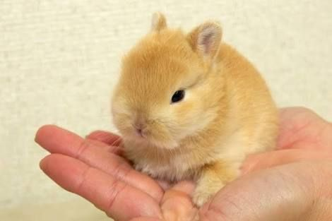 Pin By 板垣 美紗 On ネザーランドドワーフ Rabbit Breeds Cute Animals Animals And Pets