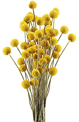 Amazon Com Huaesin 30pcs Natural Dried Flowers Craspedia Billy Balls Flowers Dried Billy Buttons Floral Bouquet Fo In 2020 Dried Flowers Floral Bouquets Billy Buttons