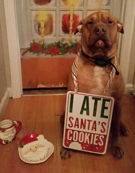 10 Fascinating Christmas Dog Shaming Pictures Dog Christmas