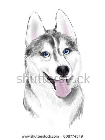 White And Gray Adult Siberian Husky Dog With Blue Eyes Face Of