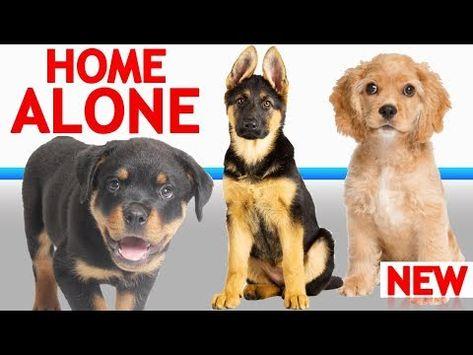 Zak George S Dog Training Revolution Youtube Dogs Training