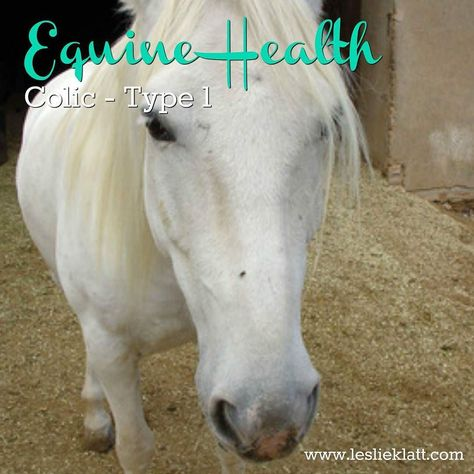 Type 1 Intestinal  What this means: - Horse's gut is inactive - not digesting food properly - Horse has improper pH balance  When weather changes occur (Summer going into Fall) horses' digestion slows down and their liver function goes dormant and their metabolism slows down.  The slower gut function effects their digestion and water balance which is where Gastric Acid can build up in some horses.  This slowing down of their system is something that happens automatically to conserve energy…